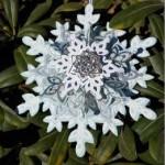 Festive Flurry Ornament