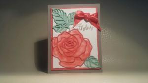 Rose Wonder Birthday